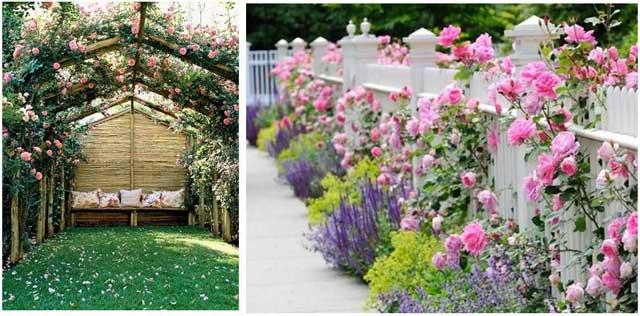Vườn hoa bốn mùa tại Topaz Elite